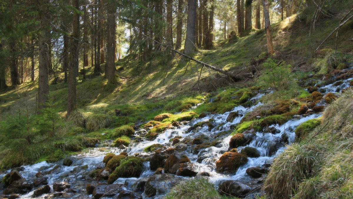 die kleineren Quellen des Doserbaches direkt unterhalb des Doserkopfes