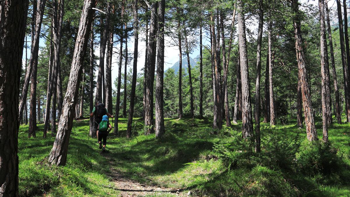 unterwegs in den Föhrenwäldern auf dem Weg nach Sinnesbrunn und den Hochflächen am Oberen Sießekopf