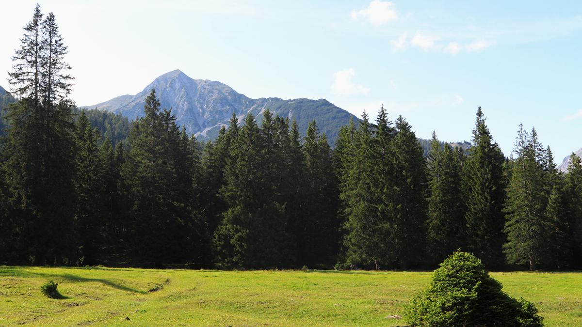 Blick vom Oberen Sießekopf (Kohlstatt) hinüber zum Alpleskopf