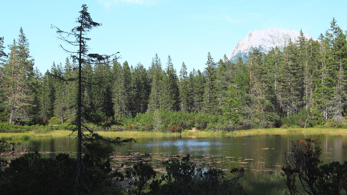 uriges Hochmoor an der Kohlstatt - im Hintergrund der Wannig (Mieminger Berge)