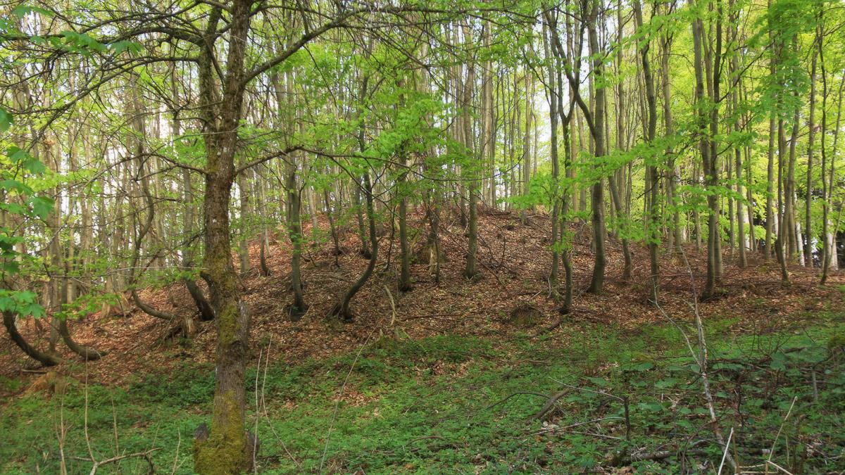 auf der Suche nach dem späthallstattzeitlichen Grabhügel nahe Roßhaupten - ob er das wohl ist?