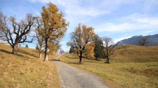 ahornbäume schwarzenberg