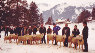 Schafausstellung 1986 in Höfen