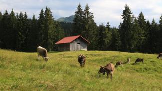 Alpe Zeiger