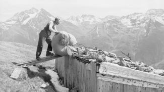 Auf der Bergmahd am Almajurjoch