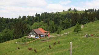 Alpe Neugreut