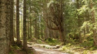 Waldweg im Schwarzwassertal