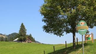Berghofer Waldalpe