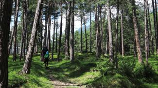 Föhrenwälder
