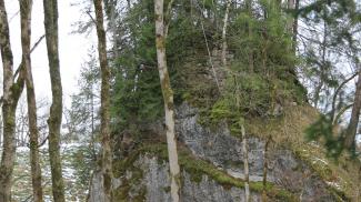 Ruine Baltenstein