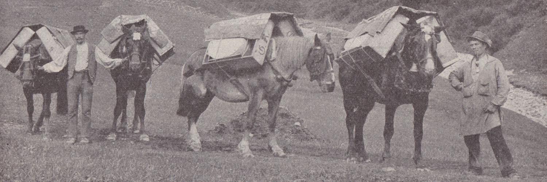 Säumer - Foto: Heimhuber (ca. 1900)